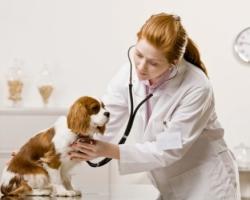 В чем важность профессии ветеринара, не только для животных но и для людей — стоит ли посвятить благородному делу жизнь